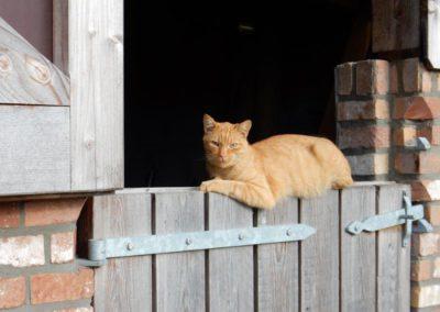 vakantiehuis aan zee domein Rietvelde kat
