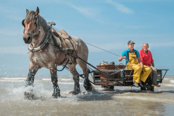 Vakantie aan de Belgische kust arrangementen paardevissers