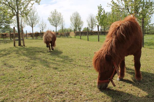 Vakantie aan de Belgische kust arrangementen pony arrangement